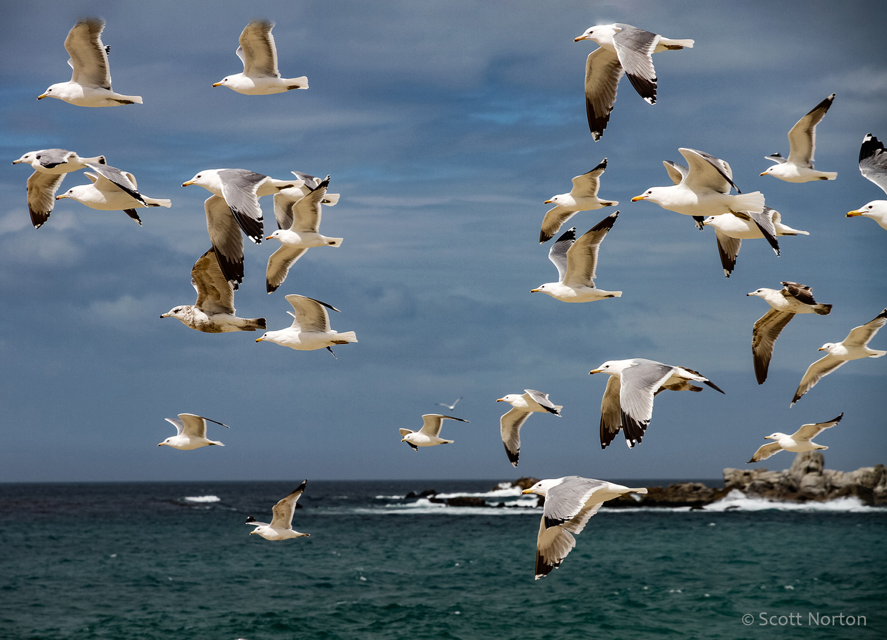 a flock of seagulls flying over carmel river beach by scott norton