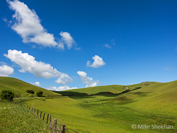 rolling green hills and a clear blue sky by mike sheehan