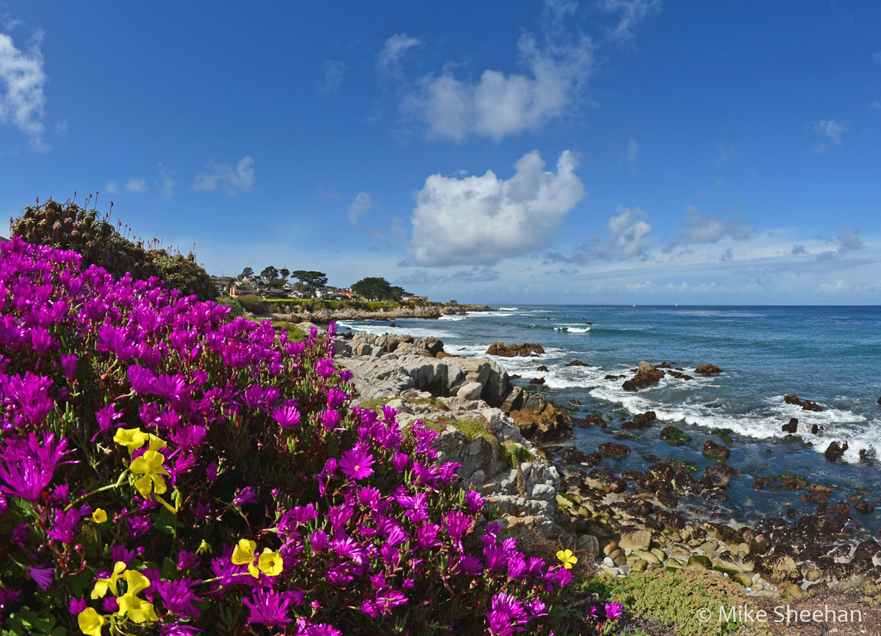 Pacific Grove by Mike Sheehan