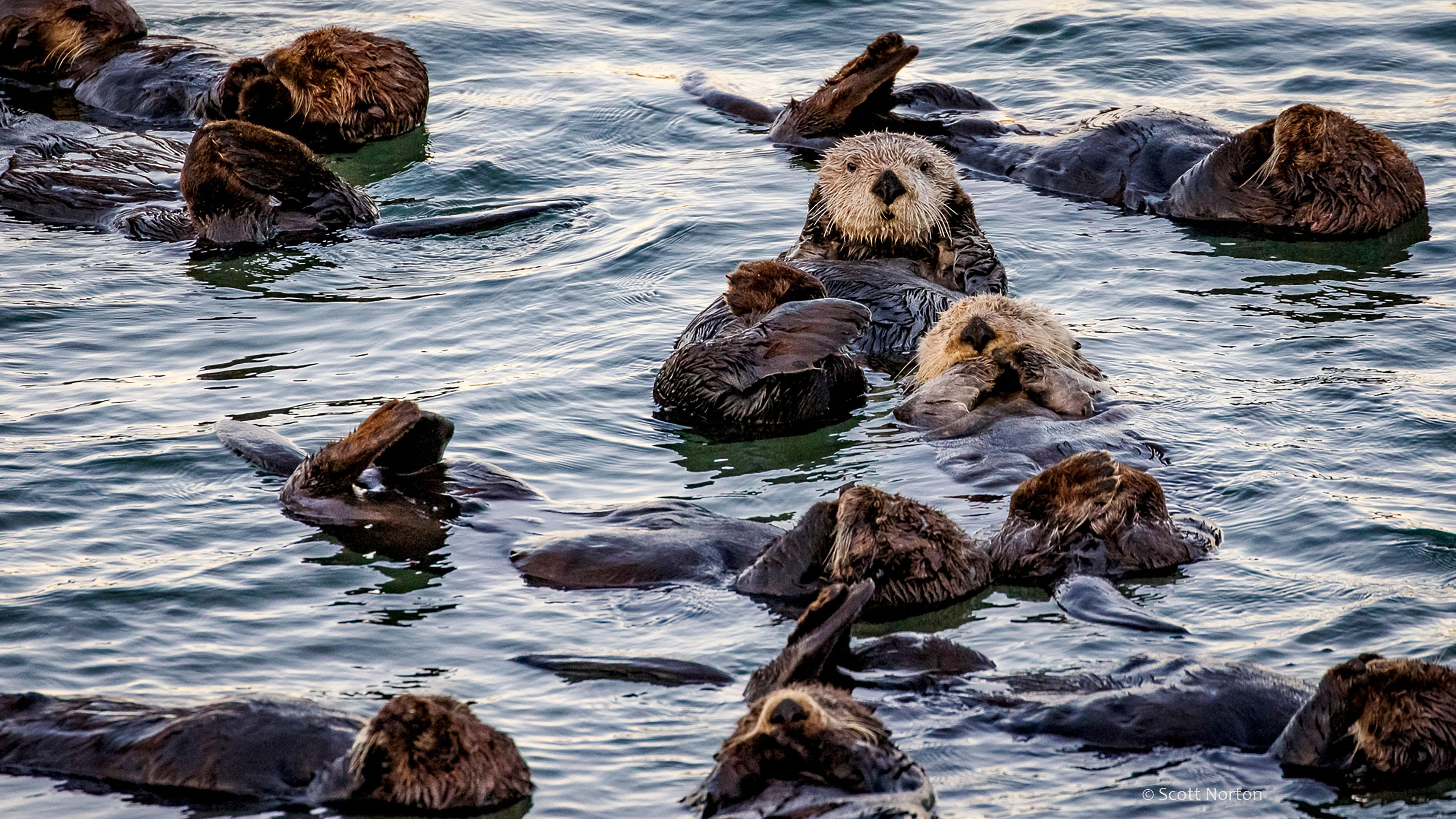 sea lions at moss landing by scott norton
